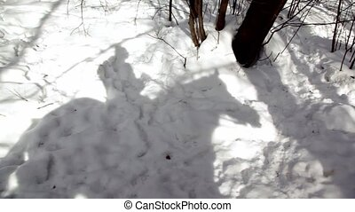 Shadow of horsman moves on snow, view from horse at winter...