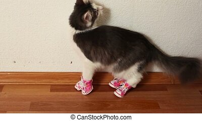 Cat in pink shoes sits on floor and then jumps - Cat in pink...