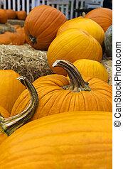 Pumpkins at Harvest Time