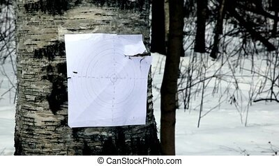 Bullet hit paper shooting mark on birch in park at winter...