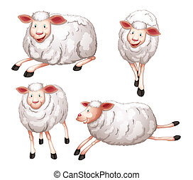 sheeps - illustration of four sheeps on a white background