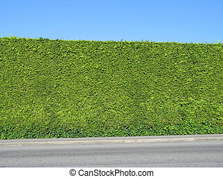 perfectly manicured hedge