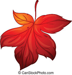 mapple leaf - illustration of red mapple leaf on white...