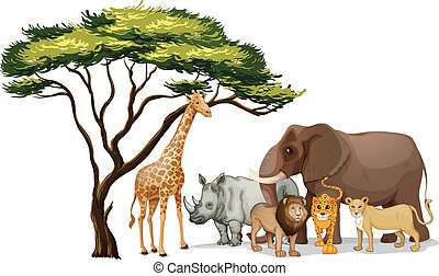 african animals - Illustration of a group of african animals