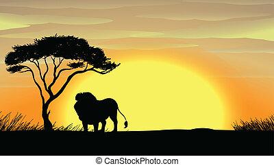 Leão, árvore, sob