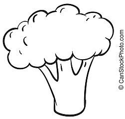 cauliflower - illustration of cauliflower on a white...