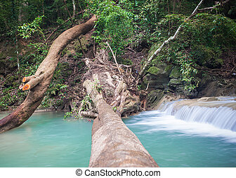 Tree falling down, across waterfall