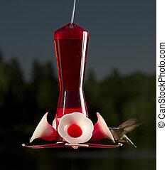 Feeding time - female ruby hummingbird head deep in a bird...