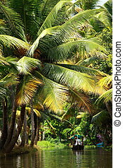 Palm tree tropical forest in backwater of Kochin, Kerala,...