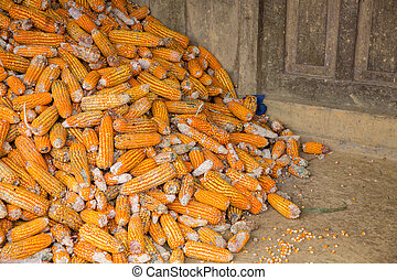 corncobs background, deep orange over ground