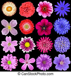 Big Selection of Colorful Flowers Isolated on Black...