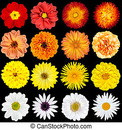 Red, Orange, Yellow and White Flowers Isolated on Black