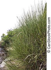 close up shot of grass