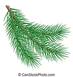 fir branch - branch on white background. vector illustration