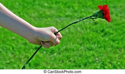 Hand holds red flower at background of green grass