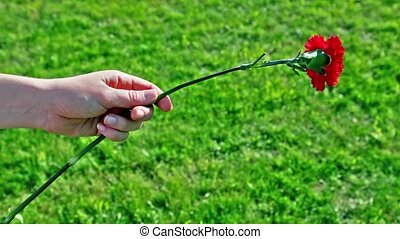 Kids hand hold red flower an ten put it away at background...