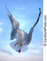 Cute Gull