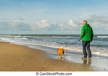 Man walking with dog at beach - Senior man is walking the...
