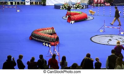 Master lead her dog during agility at International Dog Show...