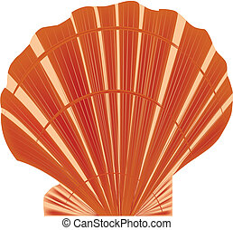 sea shell vector