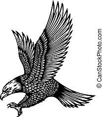 soaring, águia, vetorial, Ilustração