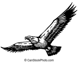 eagle vector illustration