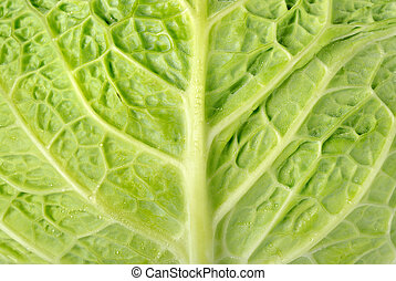 Backgrounds cabbage - Full frame cabbage leaf with water...