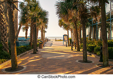 palm tree alley - alley at myrtle beach access