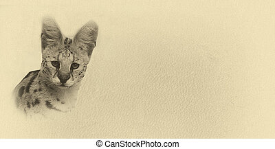 Sepia Toned Serval with Text Card Banner - Sepia Toned...