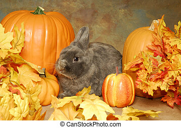 Bunny in the Pumpkins - A little grey rabbit nestled among...