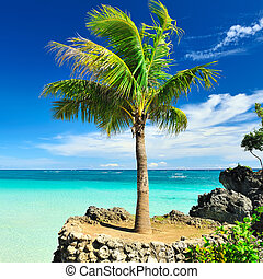 Palm tree - Beautiful palm tree at remote island,...