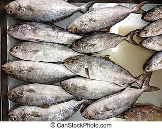 Fresh sea fishes in silver box, BLACK-BANDED TREVALLY...