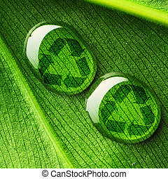 Water drops on leaf and recycle logo - Beautiful water drops...