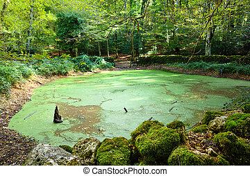 "Lago D'Otri - ""Lago D'Otri"", a Pond in ""Foresta Umbra"" -..."