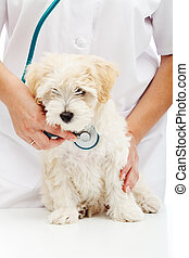 Veterinary care concept - small fluffy dog at checkup