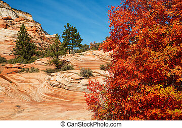 Red Maple Autumn Colors In Utahs Zion National Park