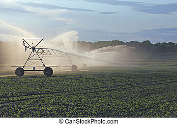 irrigating farm land - irrigation piping system waters crops...