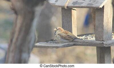 Sparrow on the feeder
