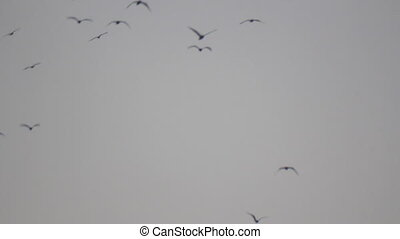 Birds flight on moody grey sky