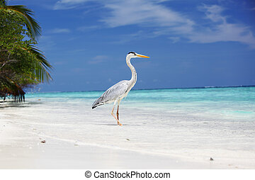 Stork on the ocean coast