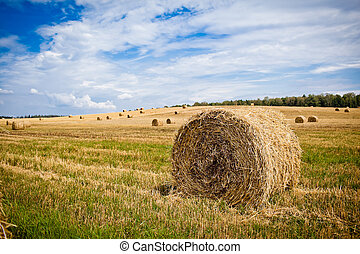 Straw Haystacks on the grain field after harvesting