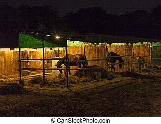 horses in the stable by night
