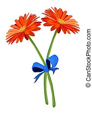 Fresh of Two Orange Gerbera Flowers with Blue Ribbon - Hand...