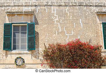 Flowers, Window & Wall