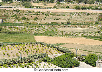 Maltese Fields - Cultivated field patches on Malta, near...
