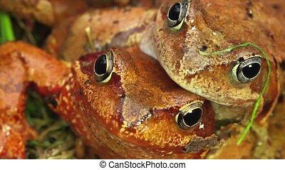 love frogs  - love frogs