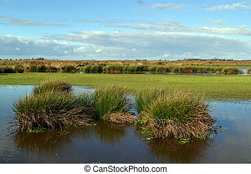 Wetland nature reserve - Wetland nature reserve the Green...