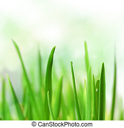 Beautiful Grass