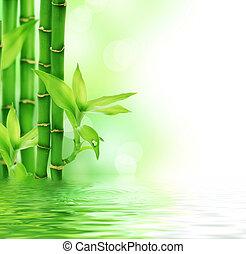 hermoso, fresco, bambú