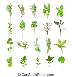 Fresh Herb Selection - Organic fresh herb selection set...